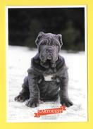 Chien - Hund - Dog - MASTINO NAPOLITANO - CANE - Chiens