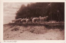 Cvb 22. Op Een Beschut Plekje (schapen Met Herder) Uitg. G. Dijkgraaf-Elspeet - Zonder Classificatie
