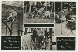 AK  Zoo Dierenpark En Kinderboerderij De Vluchtheuvel Te Norg - Animaux & Faune