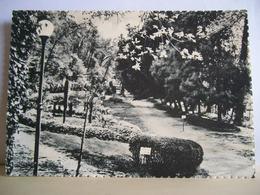 1958 - Imola - Parco Acque Minerali - Particolare - Scritta Da Angelo Banzola - Cartolina Originale - Imola