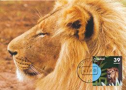 D34470 CARTE MAXIMUM CARD FD 2006 NETHERLANDS - LION LÖWE BLIJDORP ZOO ROTTERDAM CP ORIGINAL - Big Cats (cats Of Prey)