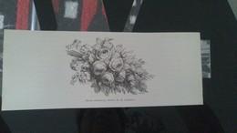 Affiche (dessin) - Roses Trémières (dessin De H. Catenacci) - Manifesti