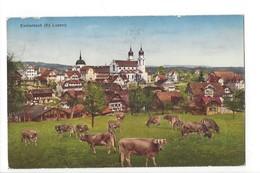 20205 - Eschenbach Troupeau De Vaches - LU Lucerne