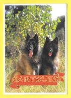 Chien - Hund - Dog - Belgian SHEPHERD TERVUEREN - CANE - - Chiens
