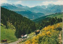 Hautes Pyrénées : ?  Vallée D ' Aure , Col D ' Aspin, Vue Sur Payolle , Pic De  Bigorre,  Vache - France