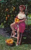 Florida Oranges With Beautiful Girl 1953 - United States