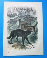 Wolves Of The Forest - Lithographies