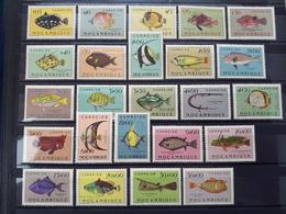 Mozambique 1951 Fish MNH - Mozambique