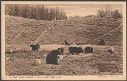 Park Bears, Yellowstone Park, Wyoming, C.1910s - Haynes Postcard - Yellowstone