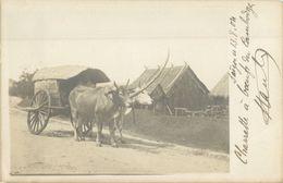 BELLE CARTE PHOTO CHARETTE A BOEUF DU CAMBODGE  1904 - INDOCHINE - Cambodia