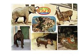 Cpm - MONACO - ZOO Centre Désacclimatation Zoologique éléphant Hippopotame Tortue Lama Singe Tigre - Hippopotames