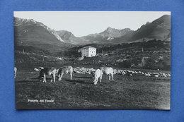Cartolina Montagna - Praterie Del Tonale - 1930 Ca. - Trento