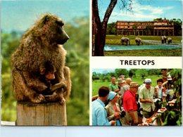 KENYA - TREETOPS - Kenya