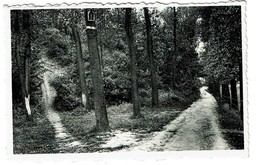 Linkebeek - Bois De Schavey - Edit. Librairie-Papeterie De Linkebeek - 2 Scans - Linkebeek