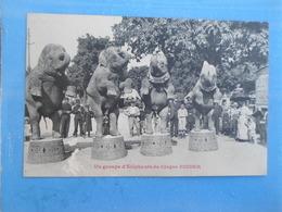Carte Postale Un Groupe D'éléphants Du Cirque Pinder - Éléphants