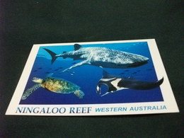 STORIA POSTALE  FRANCOBOLLO AUSTRALIA THE WHALE SHARK NINGALOO REEF - Pesci E Crostacei