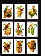 Lot 15 Images Cartonnées, Oiseaux, Scolaire, Bon Point - Unclassified