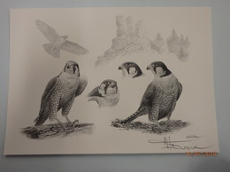 Litho A4 Buzin Slechtvalk 2 - 1985-.. Vogels (Buzin)