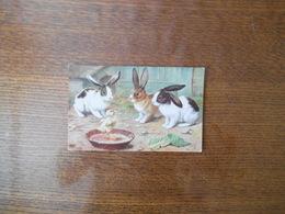 AMONG THE BUNNIES POSCARD N° 9539 - Animales