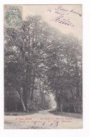 Jolie CPA L'Isle-Adam (Val-d'Oise), Forêt, Bois De Cassan, Route Des Vanneaux, Chênes Jumeaux. A Voyagé Avant 1904 - L'Isle Adam
