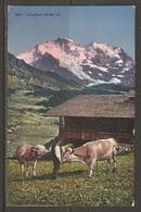 Carte P ( Suisse / Les Vaches ) - Vaches