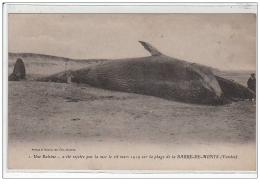 LA BARRE DE MONTS : Une Baleine A été Rejeté Par  La Mer Le 18 Mars 1919 Sur La Plage - Très Bon état - Sonstige Gemeinden
