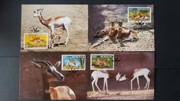 BUZIN - Sénégal: Timbres Numéro 661/64 état Cartes Maximum - Sénégal (1960-...)