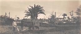 ¤¤   -  EGYPTE   -  Carte-Photo D'un Agriculteur  -  Attelage   -  Voir Description  -  ¤¤ - Egitto