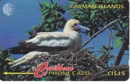TARJETA DE CAYMAN ISLANDS DE UN PAJARO (BIRD-PAJARO) 11CCID - Cayman Islands