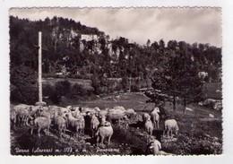 Cartolina/postcard Verna (Arezzo) Panorama. 1953 - Arezzo