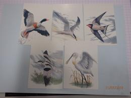 2016 Buzin Het Zwin - 1985-.. Birds (Buzin)