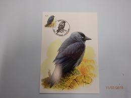 2007 Buzin Kauw Wetteren - 1985-.. Birds (Buzin)