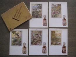"""Rare 5 Postcards """"Dr. Madaus"""" Bilderserie Homöopathischer Heilmittel Radebeul Dresden Homéopathie + Original Cover - Santé"""