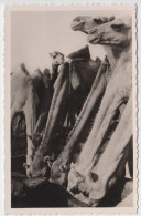 3281 - Cartes Postales Afrique - MAURITANIE - Mauritanie
