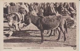 D230. Donkeys Marrakech - Anes