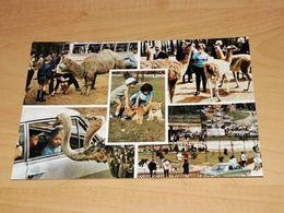 Ansichtskarte-8069--Tüddern-Löwen U. Großwild-Auto-Safari--ngl - Deutschland