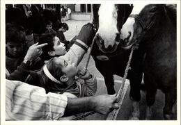 29 - LANDIVISIAU - Concours Régional Du Cheval Breton - 1988 - Carte Moderne - Landivisiau