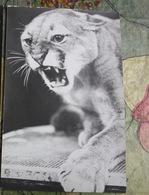"""GEORGIAN CIRCUS. TBILISI . Juggler Bagdasarov.  Cougar - From """"Soviet Circus 60 Years"""" Postcard Set - 1960s - Cirque"""