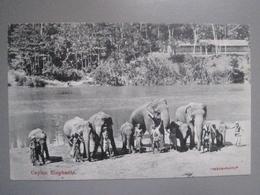 CPA Antique Postcard - Ceylon Ceylan - Elephants - Skeen Photo - Sri Lanka (Ceylon)