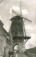 004303  Hollands Molenlandschap  1959 - Niederlande