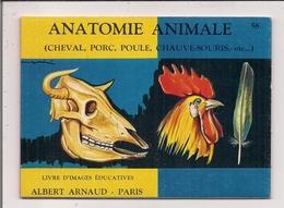 Livre D'Images Educatives Albert Arnaud  -   Anatomie Animale (Cheval, Porc, Poule, Chauve-souris Ect...) - Old Paper