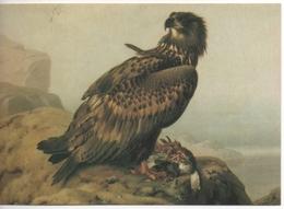 Bird - Oiseau - Vogel - Uccello - Pássaro - Pájaro - Fauna - White-tailed Eagle On The Rock - Ferdinand Von Wright - Malerei & Gemälde