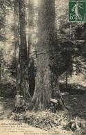 B 6762 - Jura - Touriste (39) Forêt De La Joux    Le Président - France
