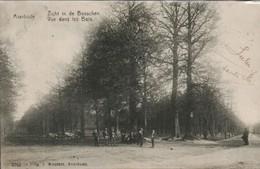 Averbode Vue Dans Les Bois - Belgique