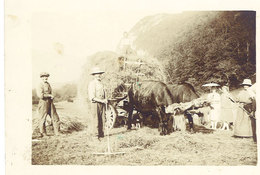 Photo Agriculture Attelages Boeufs, Foins - Métiers