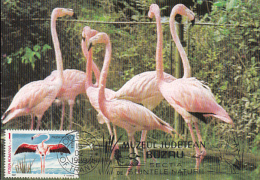 BIRDS, AMERICAN FLAMINGO, CM, MAXICARD, CARTES MAXIMUM, 1989, ROMANIA - Flamingo