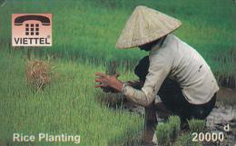 VIETNAM - Rice Planting, Fake - Vietnam