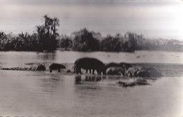 °°°°°   SOUDAN /  HIPPOPOTAMES AU BAIN   °°°°°  ////   REF.  JUILLET 18  /  N° 6951 - Sudan
