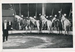 Cirque Circus Dressage Chevaux Format 14,5 Par 10 - Cirque