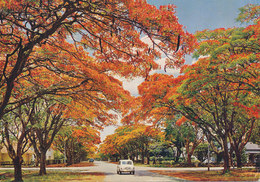 Rhodesia Saliabury Zimbabwe Postcard Flamboyant Trees Blakiston Street Sent To Denmark 4-1-1971 - Zimbabwe